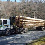 Camion transportant du bois
